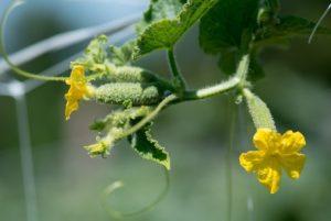 foto3-300x201 Poljoprivreda
