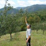 DSC00134-150x150 Mini sušara Ive Kneževića vrši usluge sušenja voća