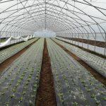 CRS-plastenici-2-150x150 Razvoj plasteničke proizvodnje u općinama Žepče i Maglaj i Gradu Doboj