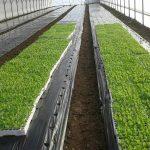 CRS-plastenici-7-150x150 Razvoj plasteničke proizvodnje u općinama Žepče i Maglaj i Gradu Doboj