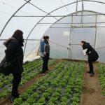 Doboj-2-150x150 Kontrolne posjete proizvođačima salate u Gradu Doboj