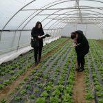 Doboj-3-150x150 Kontrolne posjete proizvođačima salate u Gradu Doboj