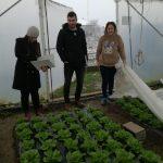 salata-1-150x150 Kontrolne posjete proizvođačima salate u općini Maglaj