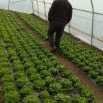 Anto-Mrkonjic-1-150x150 Počeo otkup zelene salate  u Žepču